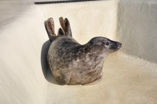 Bert in der Seehundstation